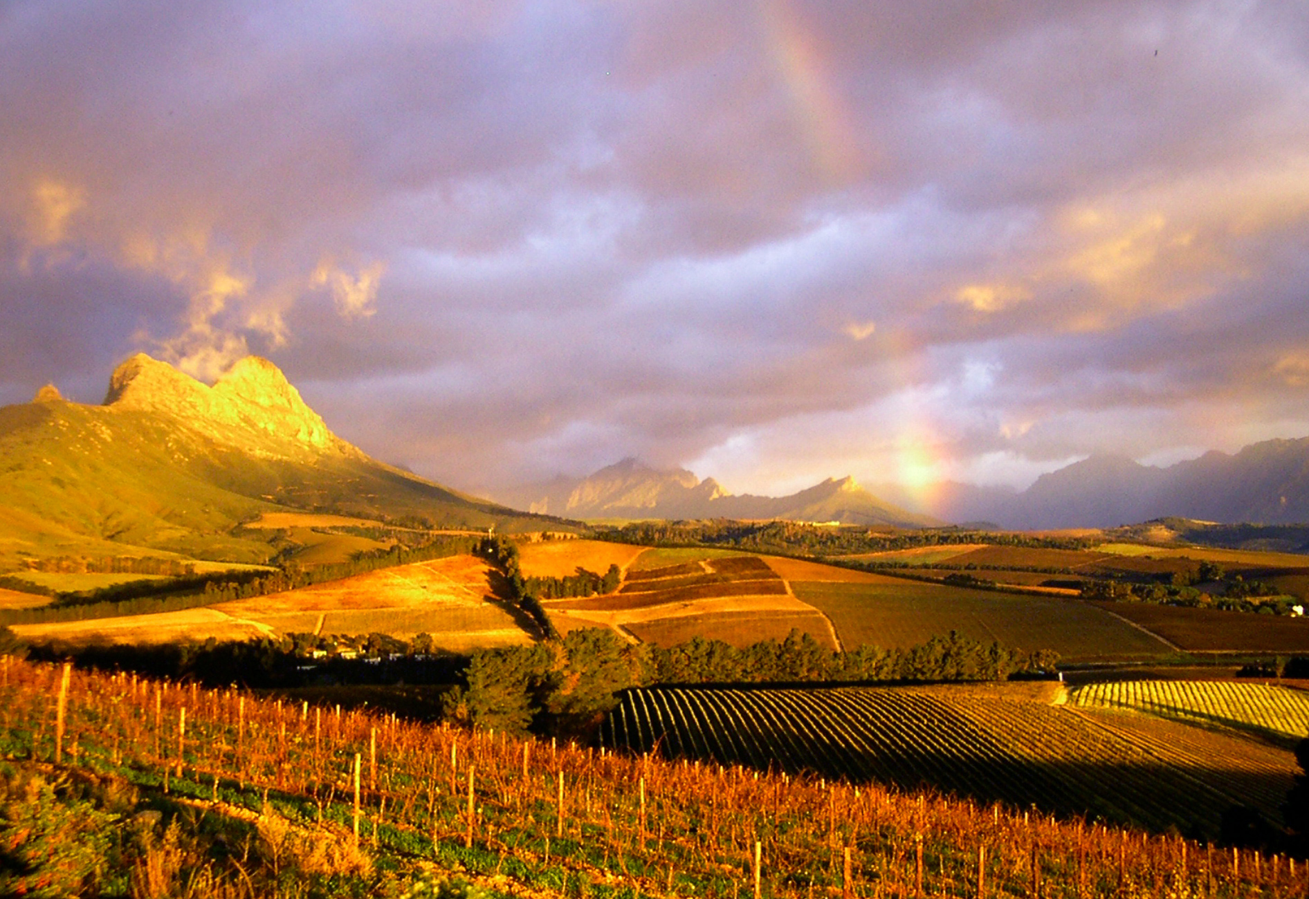 Vinehopper the best way to experience the stellenbosch for Jardin winery south africa